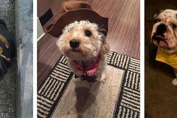 Mini banner dog halloween